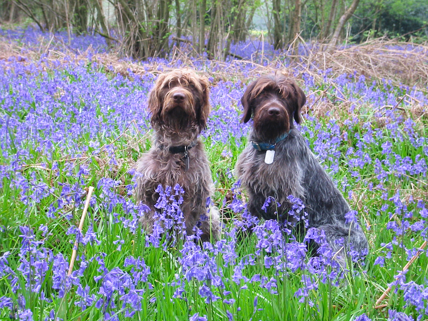 A break in the Bluebells, 2004.